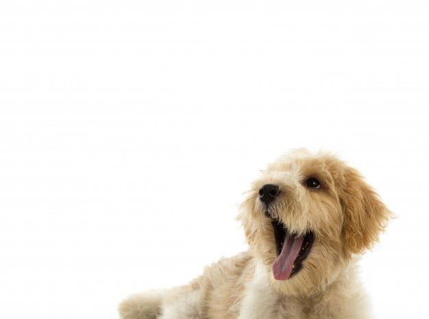 Four Reasons Grooming Your Pet Is Important